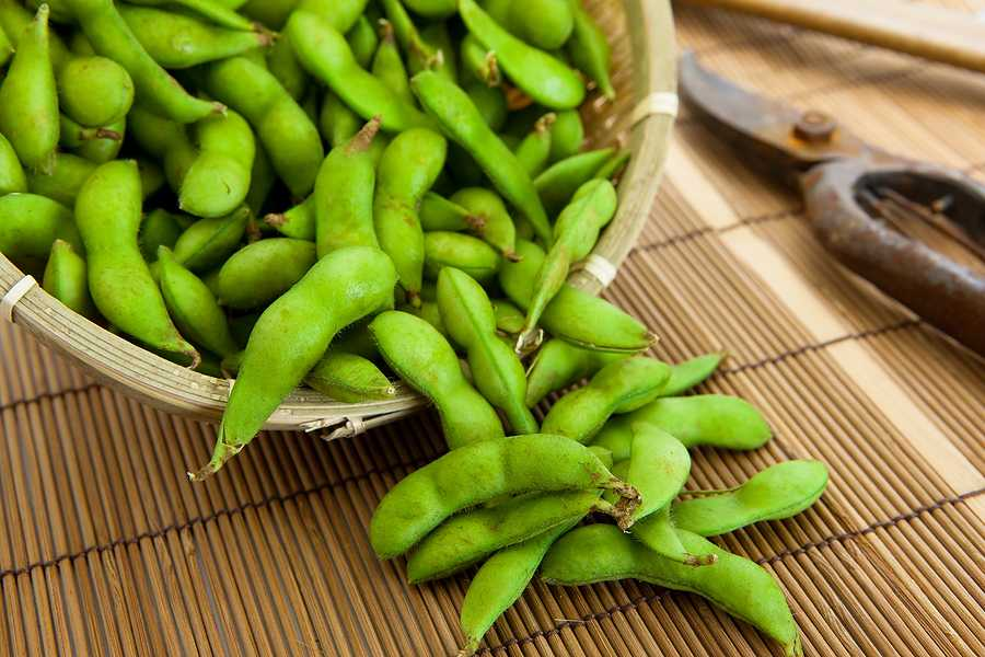 Soy Beans - improve memory with Phosphatidyl Serine (PS)